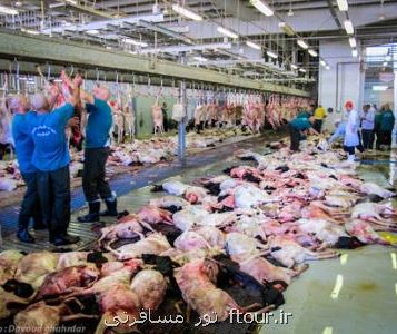 رییس حج پاسخ داد: چرا گوشت های قربانی حج به ایران برگردانده نشد؟