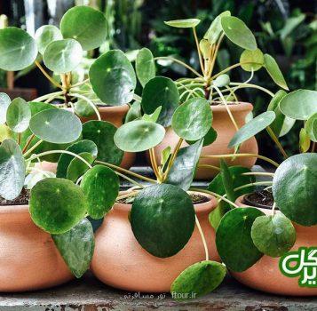 چند ترفند آسان برای زیبا شدن منزلتان با گیاهان آپارتمانی
